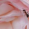 働き蟻さん